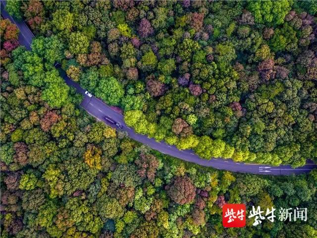 目前,钟山风景区已进入秋景最佳观赏期,金秋的钟山绚丽多姿,南马赛道